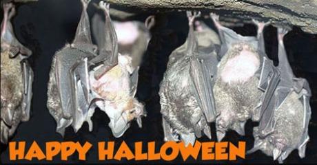 Bat Blog