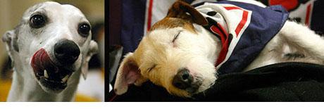 dogshowblog.jpg