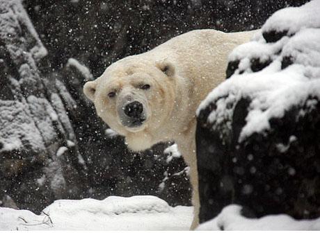 gus-snow