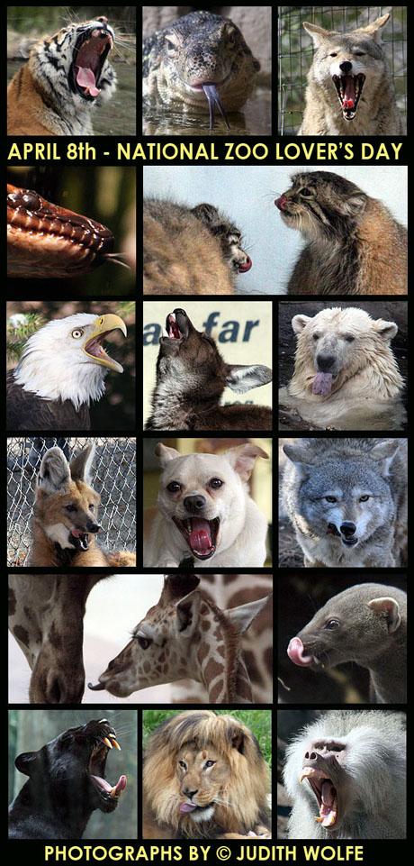 zooloversdayblog